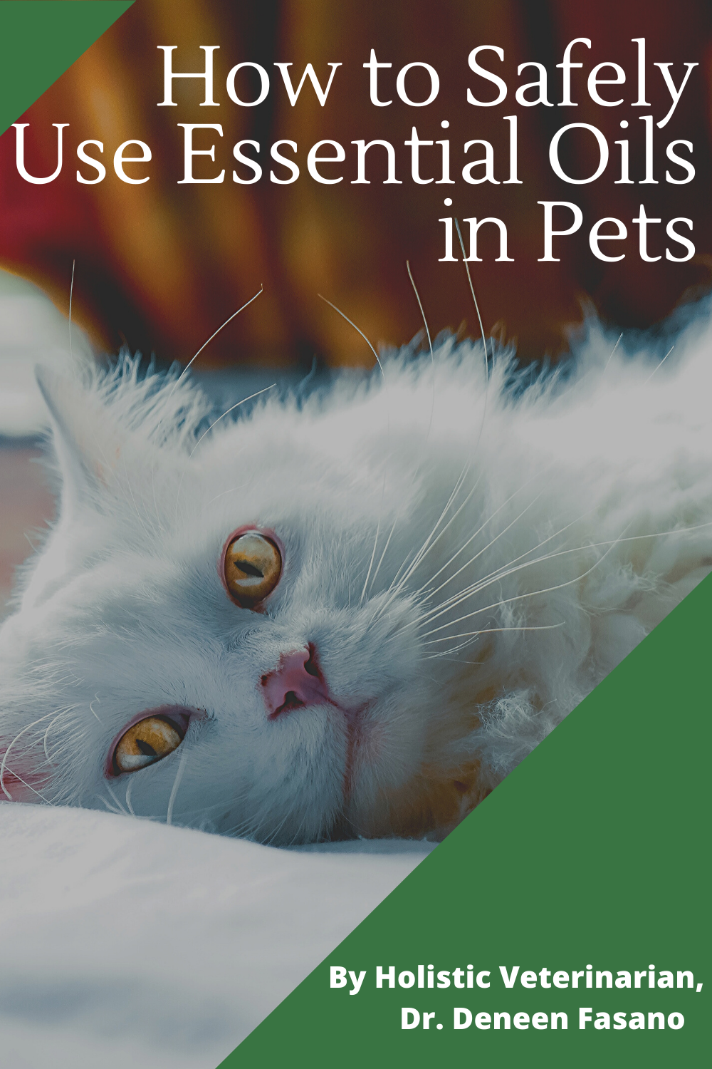 Holistic Veterinary Blog PawromaTherapy in 2020 Pets