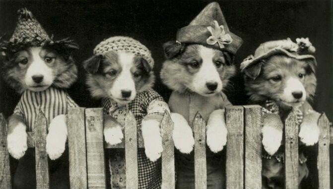 Pin von Teresa Langston auf IT'S A DOG THING Vintage