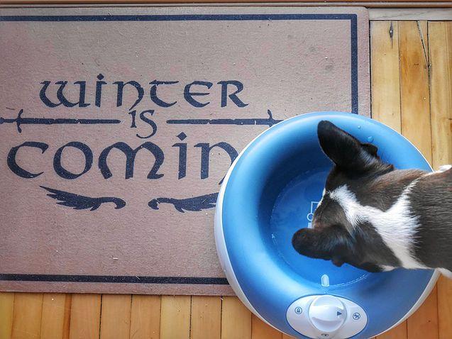 Dogwalksintoabar Dog Deals Dog Blog Dog Swags