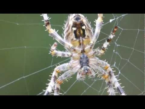 ▶ Spider Web Construction in Slow Motion - YouTube