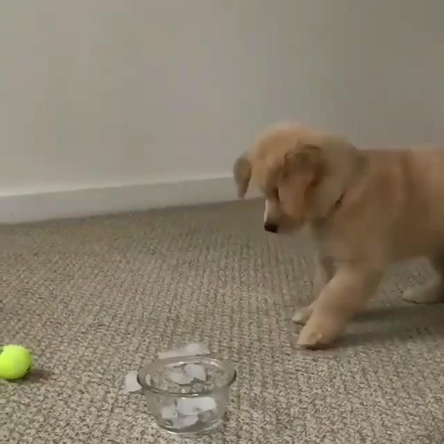 Hunde Welpen Videos lustig #cutepuppies
