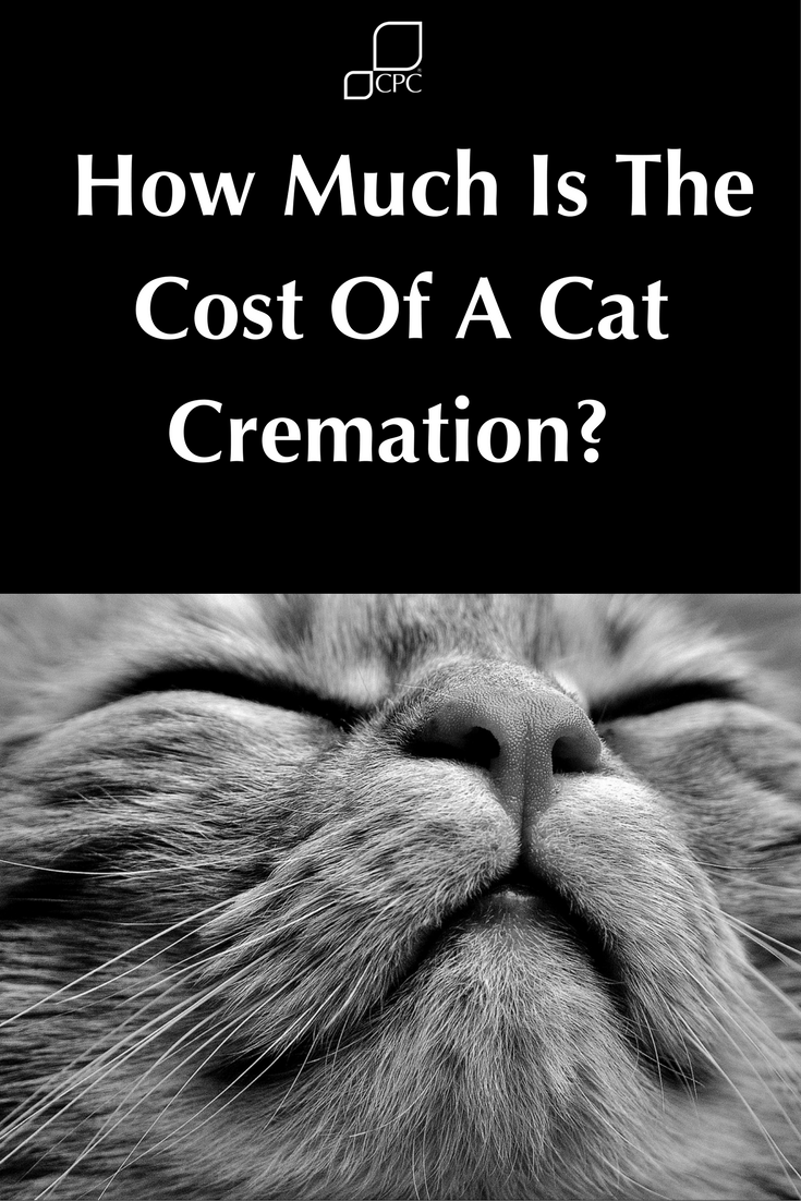 How Much Does An Individual Cat Cremation Cost Cpc Cares Pet Hacks Pet Bereavement Pets