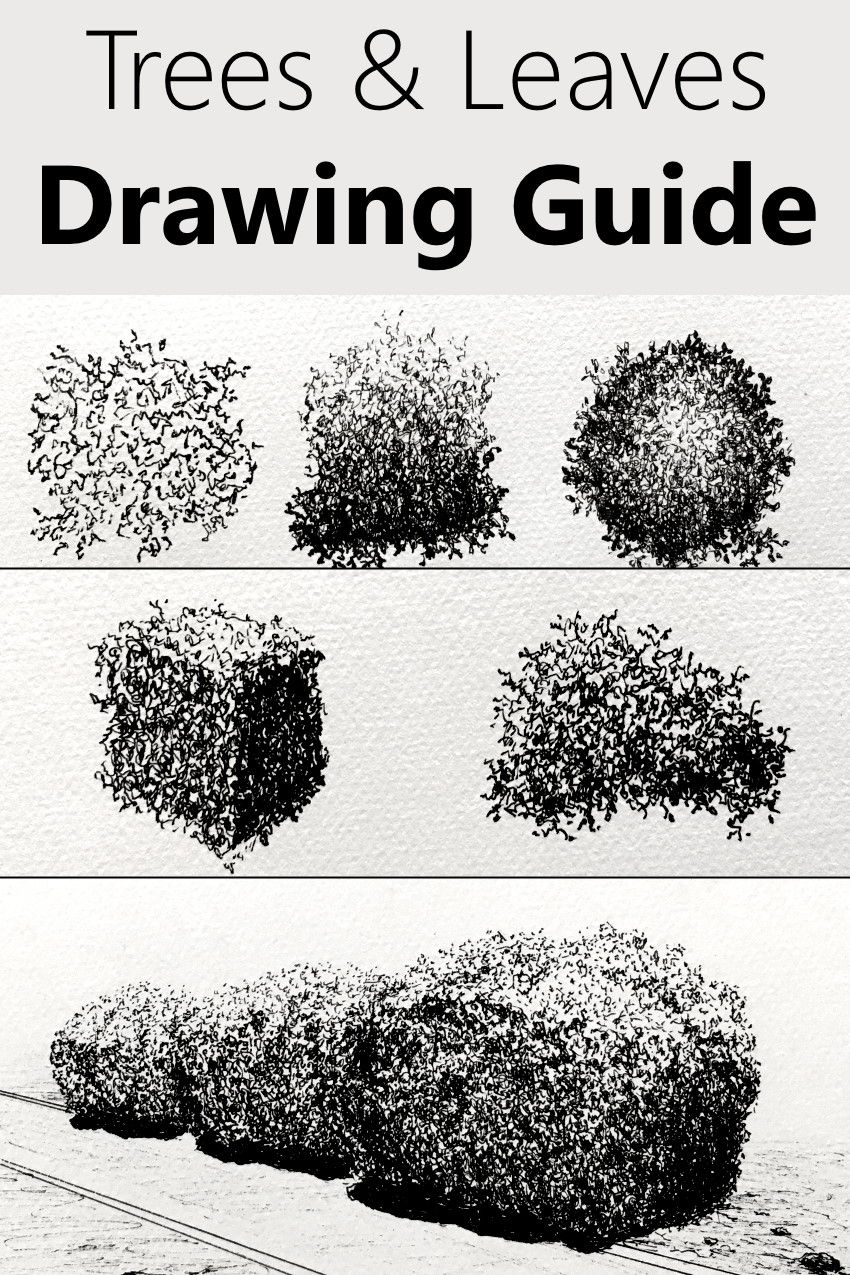 Photo of How to Draw ANY Tree with Pen & Ink