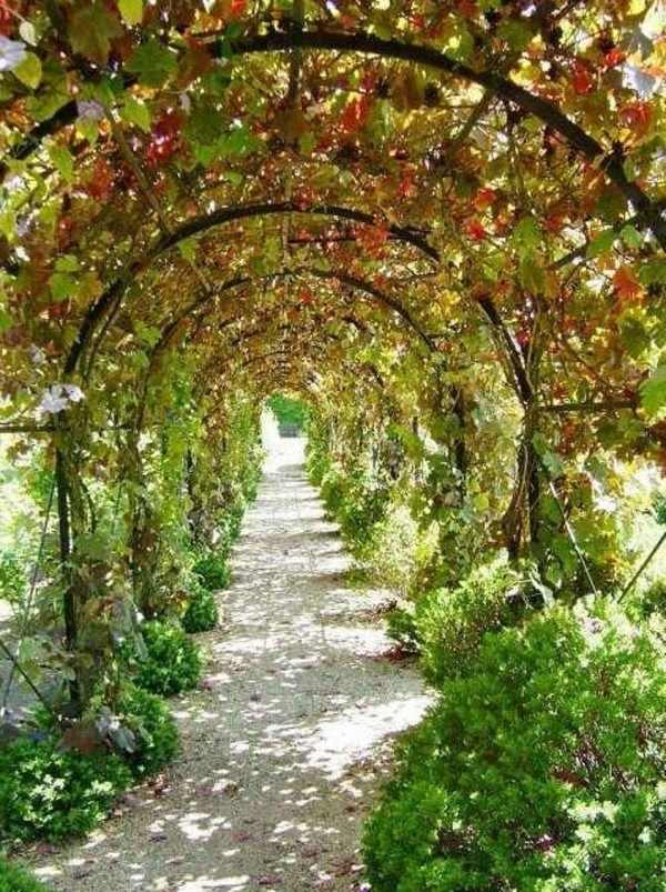 How to Build a Grape Arbor by Yourself   gardening   Grape ...