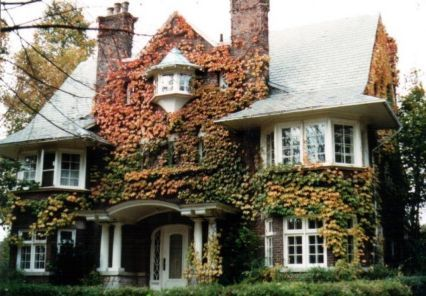 Vine Covered Home