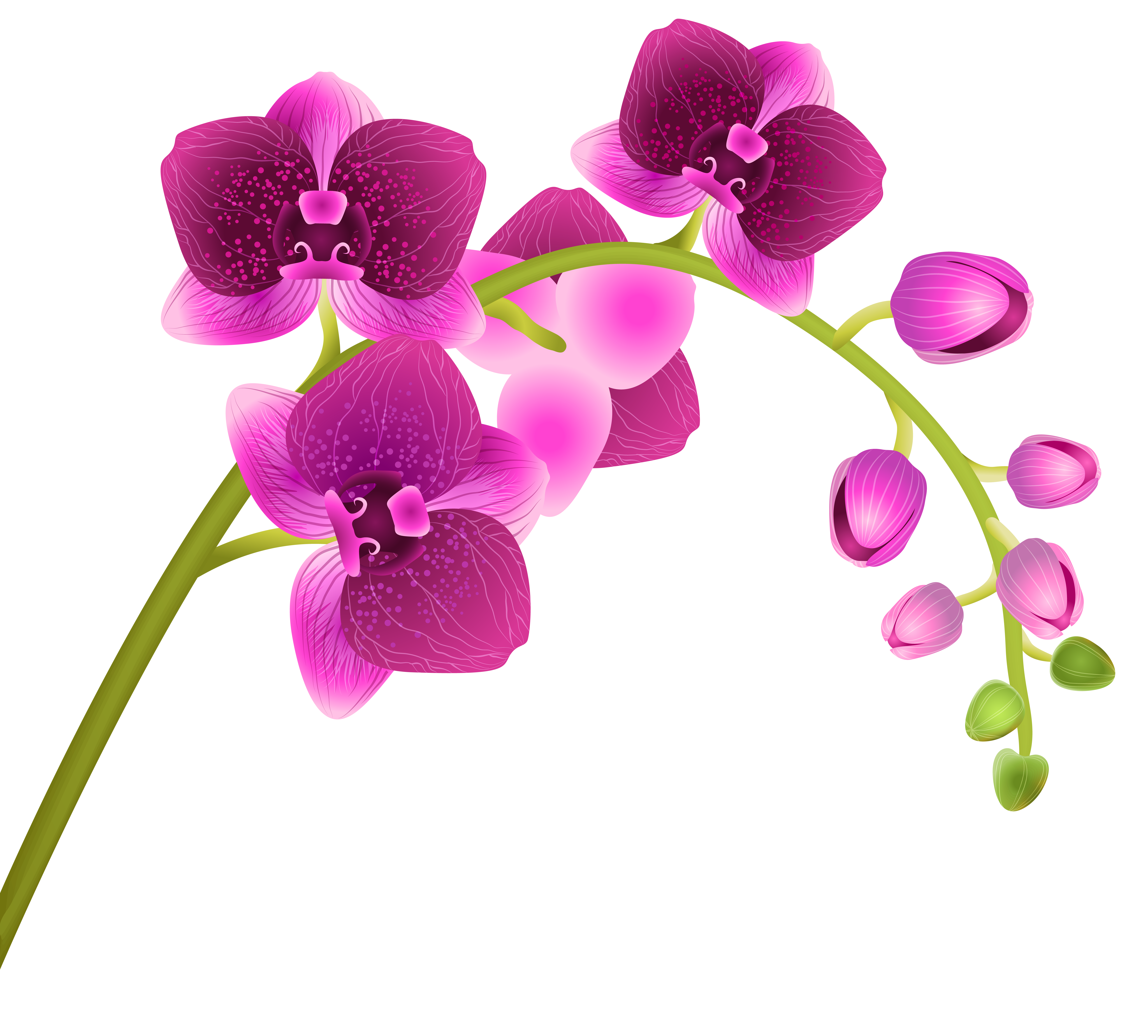Orchid Flower Transparent Png Clip Art Image Gallery Yopriceville High Quality Images And Transpa In 2020 Simple Flower Drawing Flower Drawing Flower Illustration
