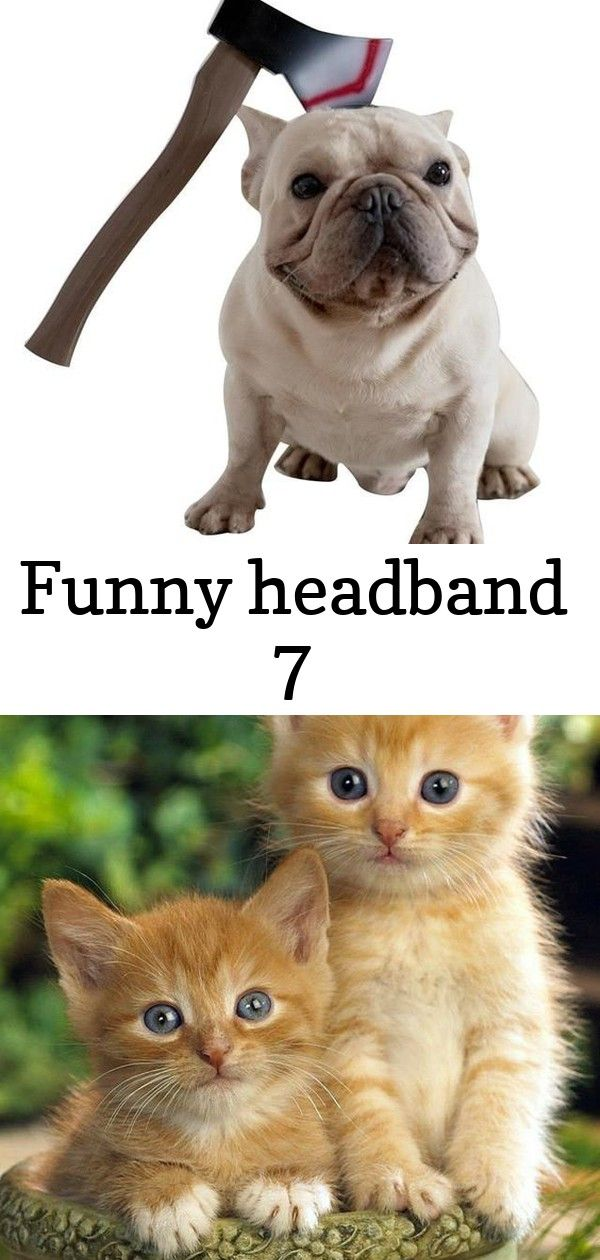 Funny Headband 7 Cat Facts Pets Cats Tabby Cat
