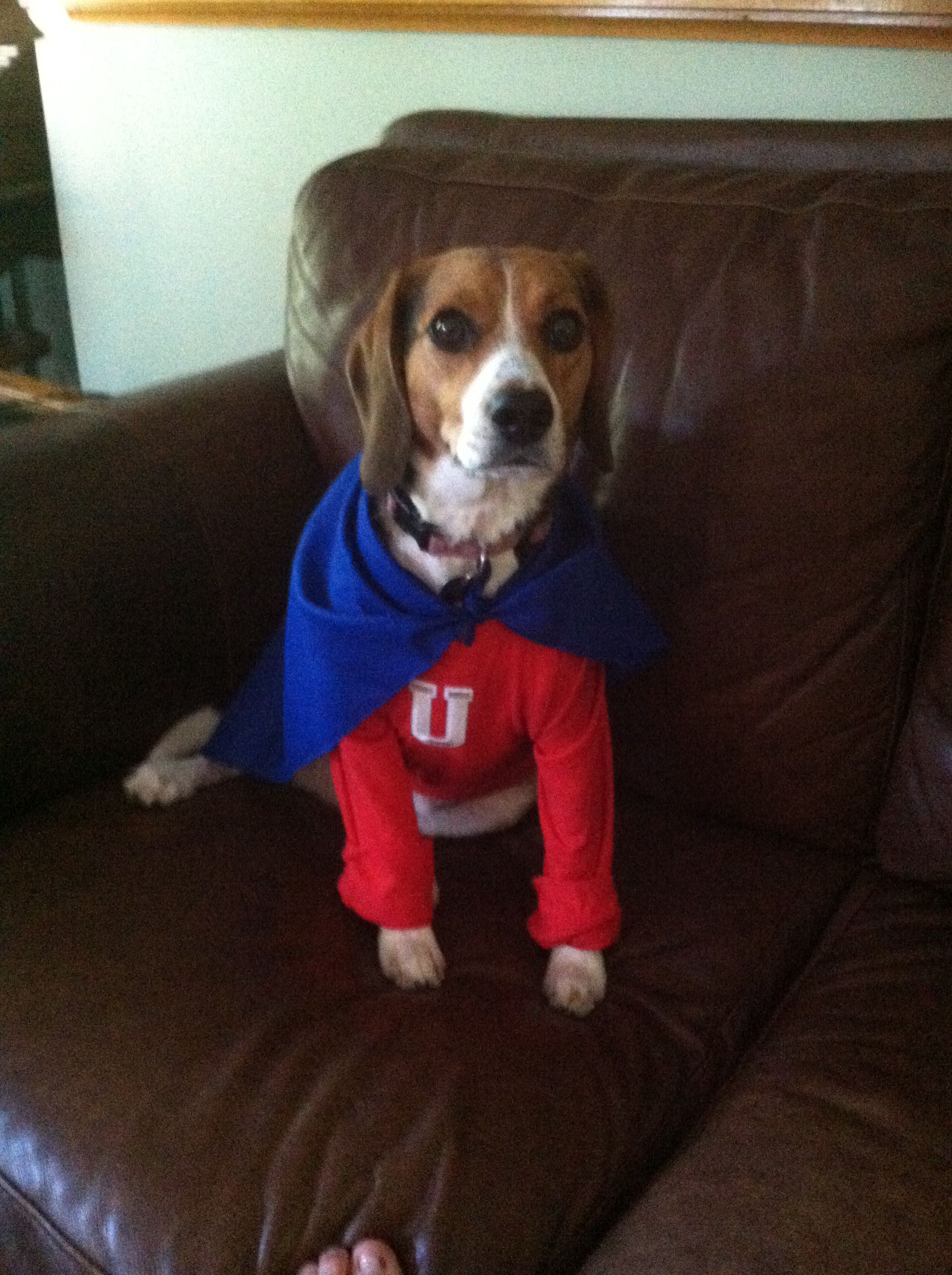 Homemade Underdog Costume Dog Costume Cute Animals Dogs