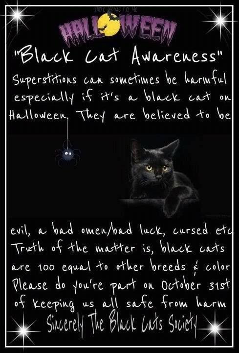Black Cat Awareness