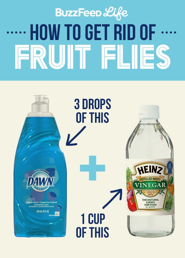 How To Get Rid Of Fruit Flies Using Dish Soap