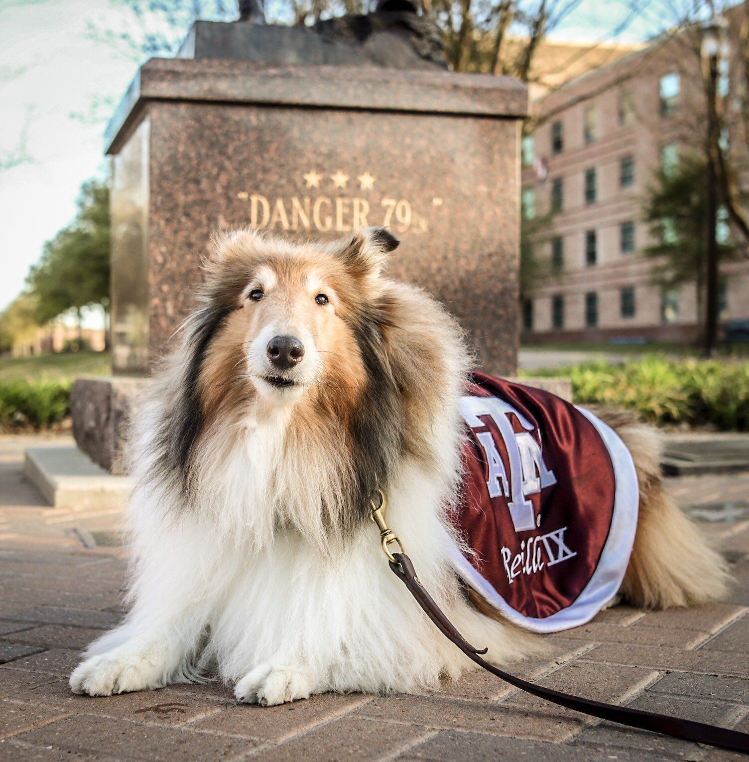 This Is A Beautiful Pic Of Reveille Ix At C Stat By The