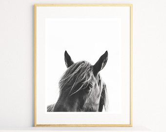 Horse Wall Art, Horse Print, Black And White Photography, Modern Art,  Equestrian