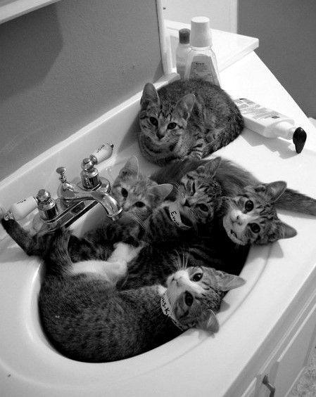 kittenss!!! :D