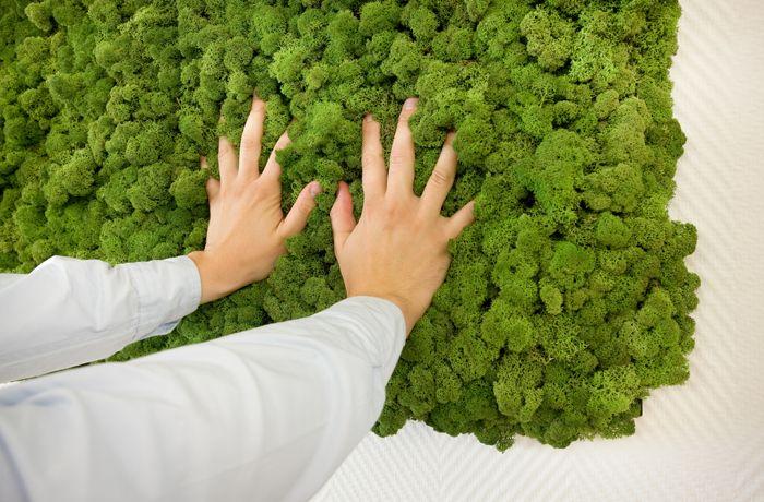 Freund gmbh evergreen die nat rliche mooswand living pinterest moos mooswand und - Vertikaler garten innenraum ...