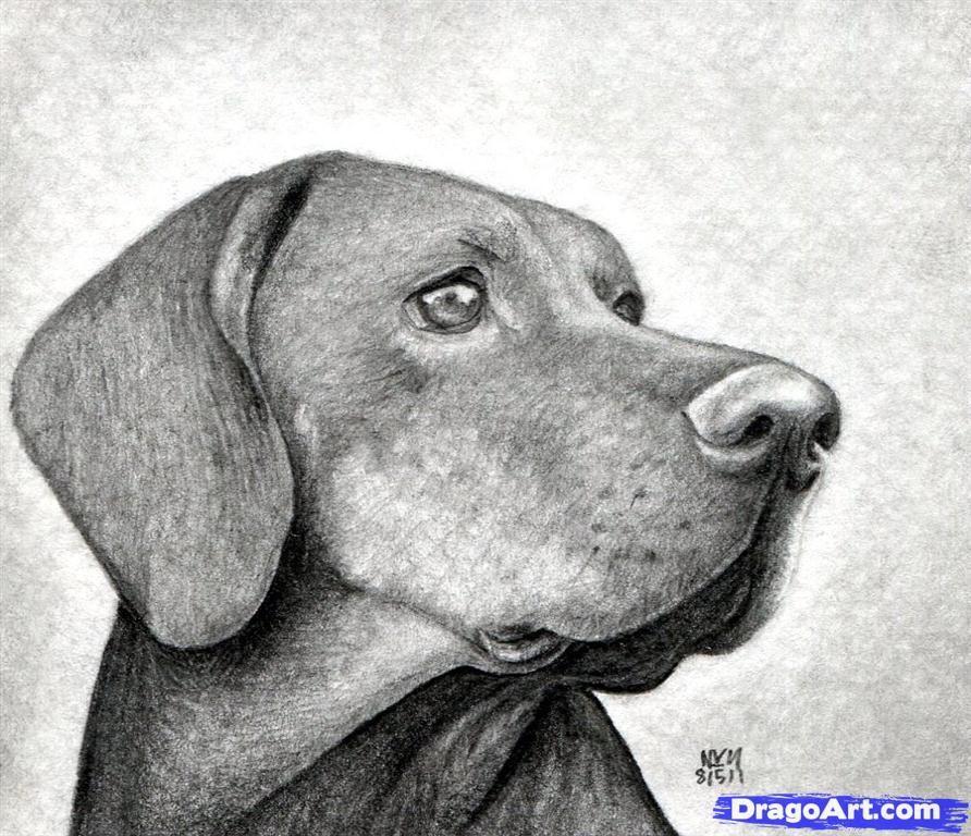 Como Dibujar Algunos Animales Realistas Parte1 Perros