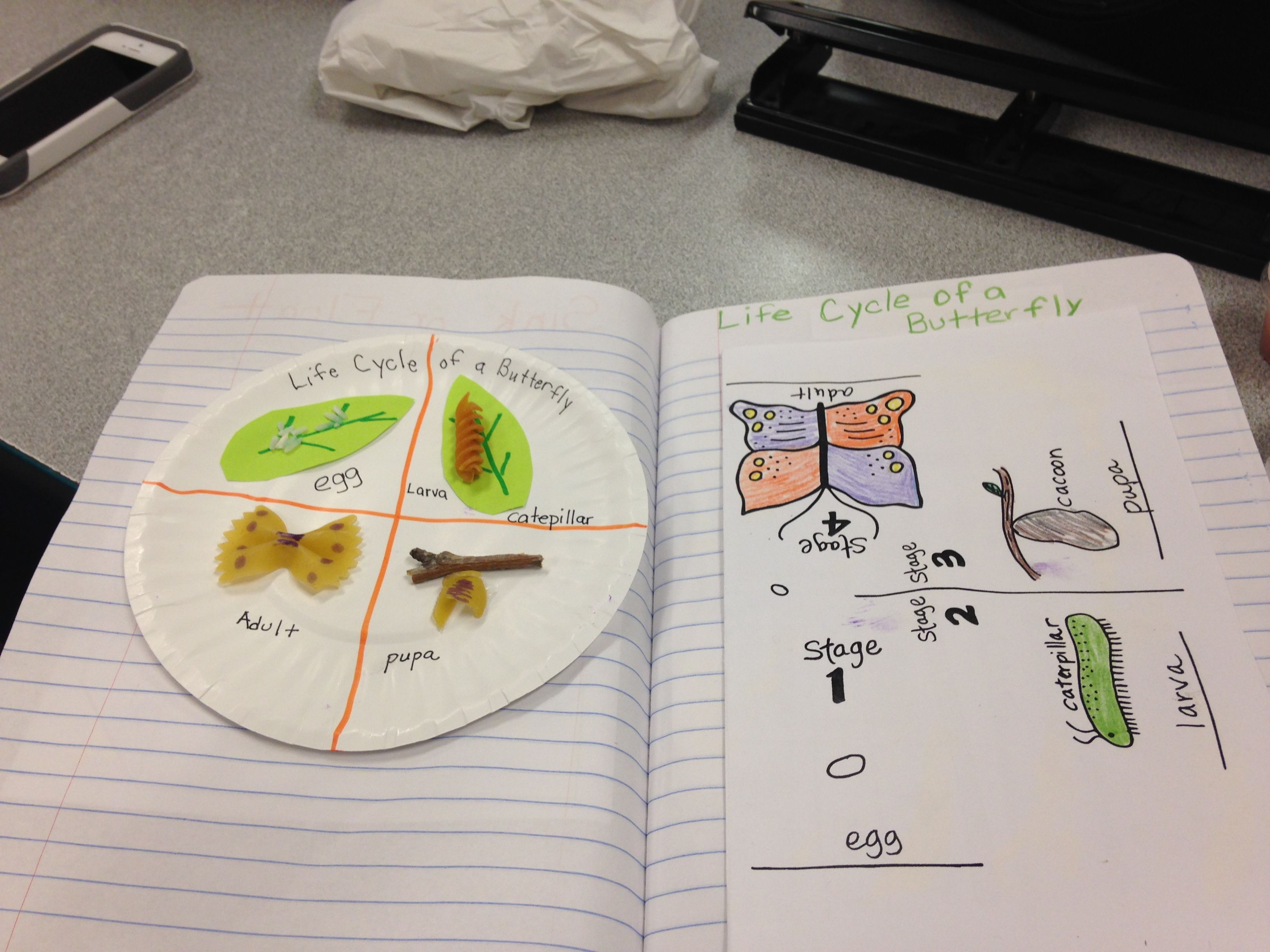 Complete Metamorphosis Butterfly Life Cycle