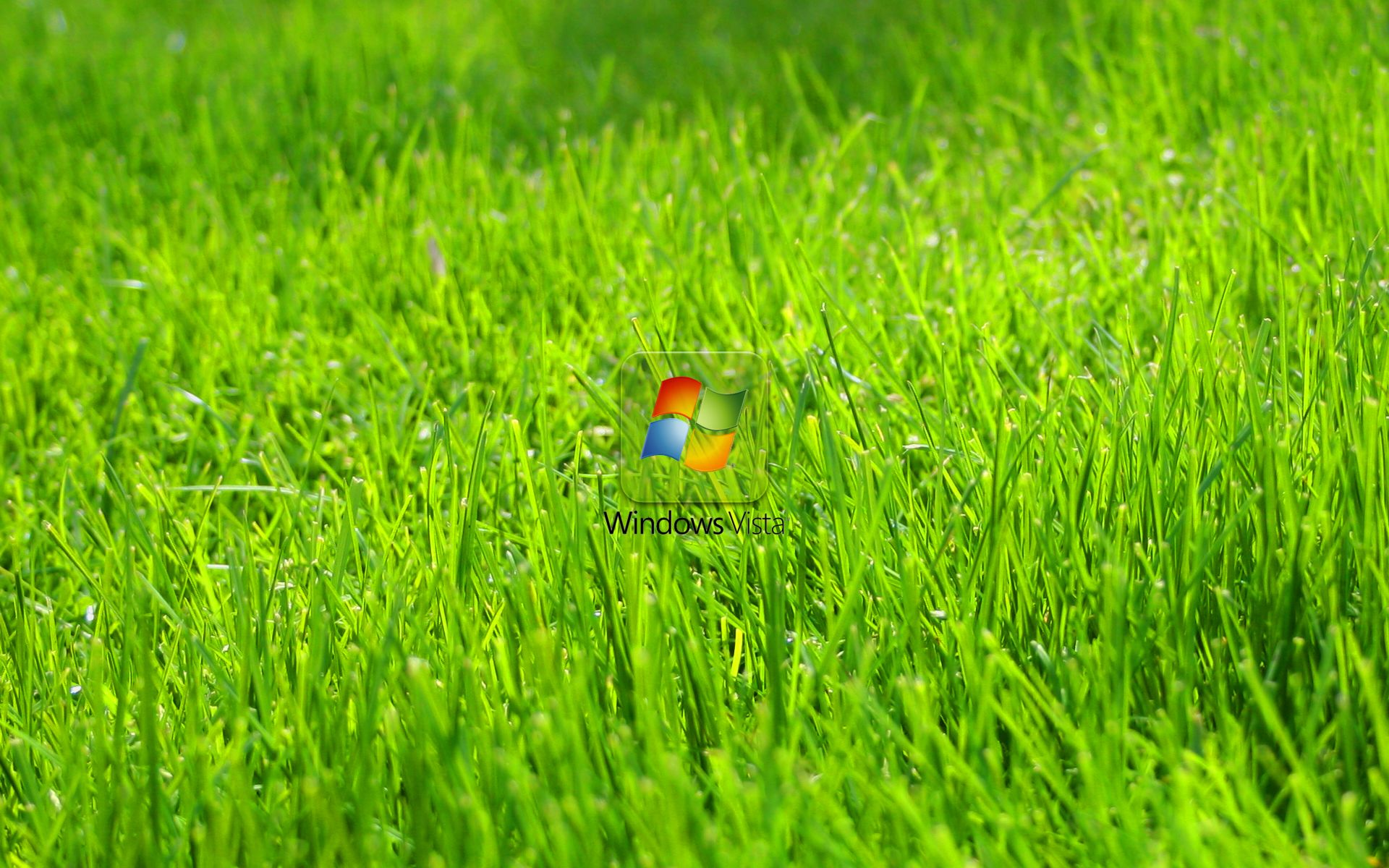 Обои grass, windows. Windows foto 13