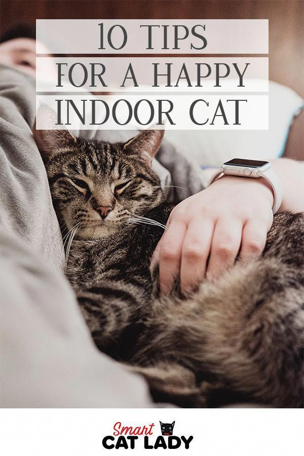 for Your Intractable Cat (With images) Indoor cat, Cat