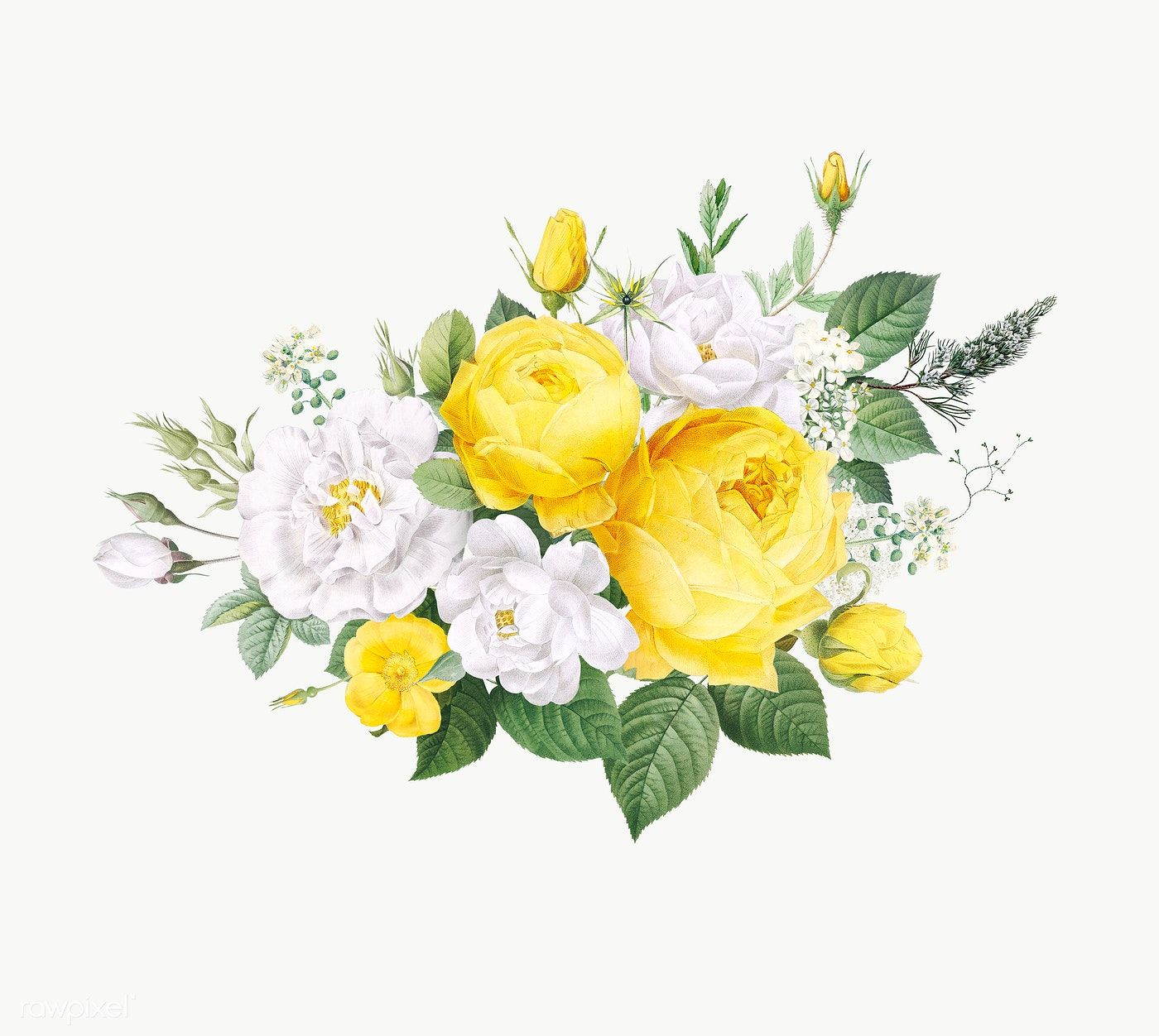 Download Premium Png Of Vintage Blooming Roses Design Transparent Png In 2020 Flower Illustration Flower Drawing Floral Watercolor