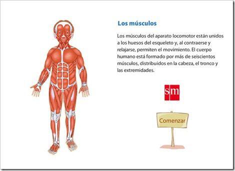 Aparato Locomotor Musculos Del Cuerpo Humano Cuerpo Humano