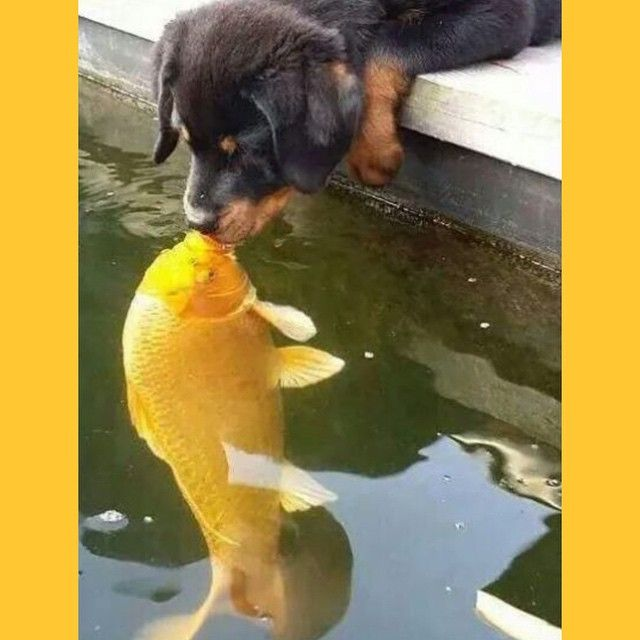 """Love is in the air... Or in the water #love"""