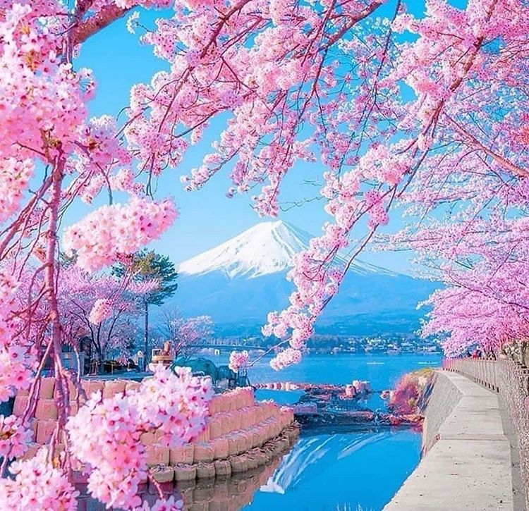 Mountfuji In Japan Spring Is Definitely The Best Time To Visit Japan When The Cherry Blossom Is In Full Bloom Photo Beautiful Nature Nature Pictures Nature