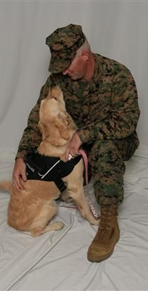 Paws For Veterans - Ptsd Service Dogs, Psychiatric Service Dogs, Service Dogs Training