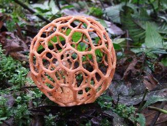 Coolest Mushroom Ever!