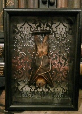 Gothic Wall Decor gothic art bat display wall decor   gothic decor and more