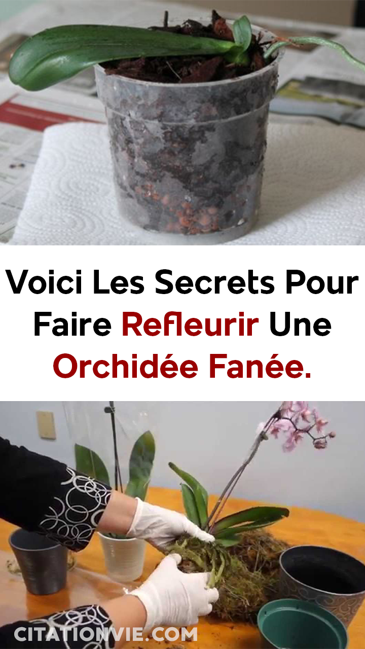 Epingle Par Cedric Ducourneau Sur Jardinage Faire Refleurir Une