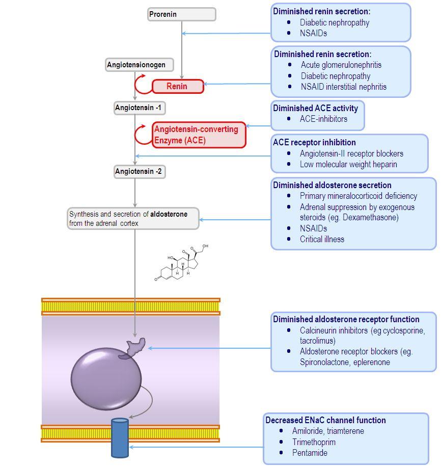 causes of type 4 renal tubular acidosis Pediatría, Receptor