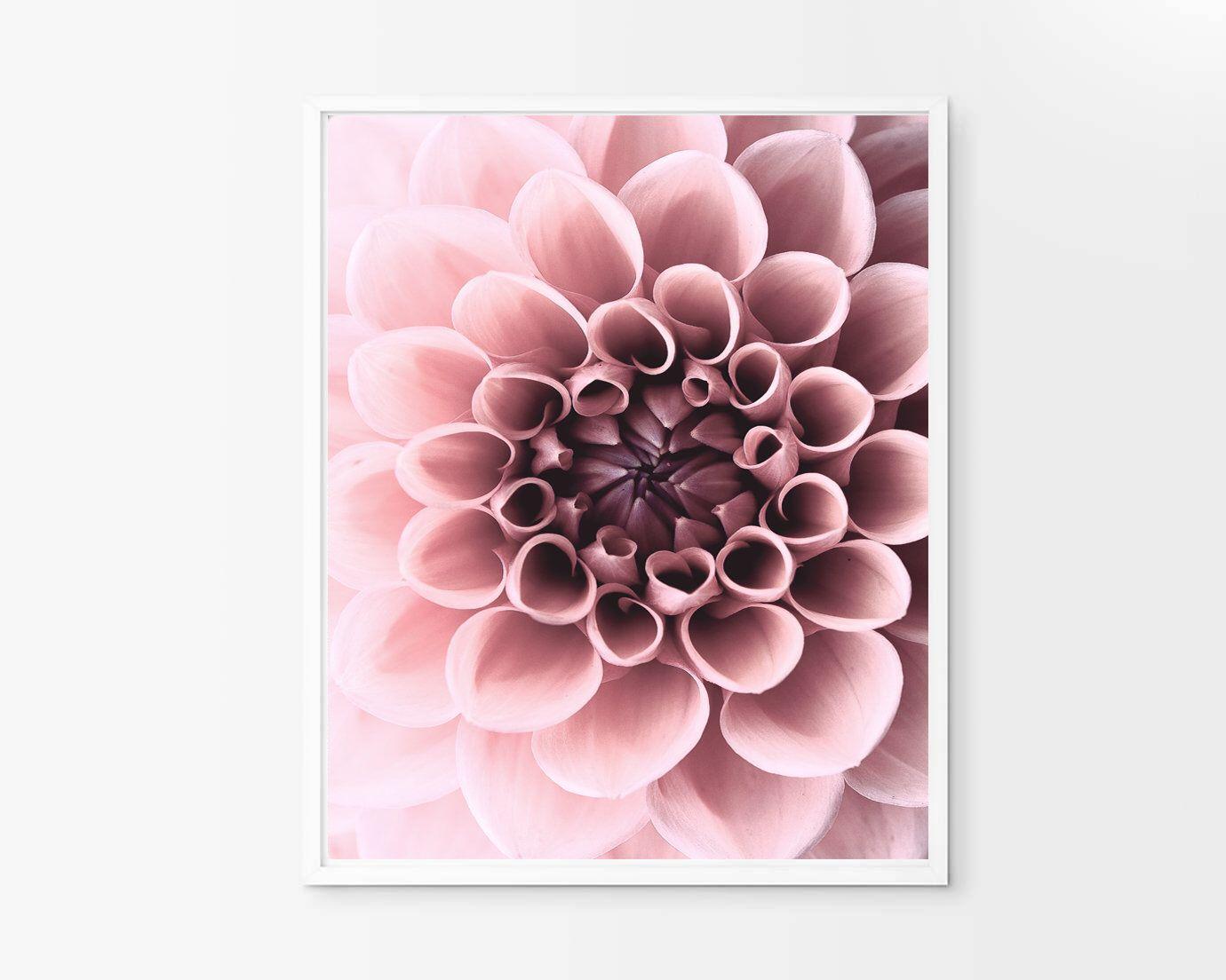 Dahlia Print Pink Blush Wall Art Flower Wall Decor Digital Etsy Flower Wall Decor Blush Walls Flower Wall