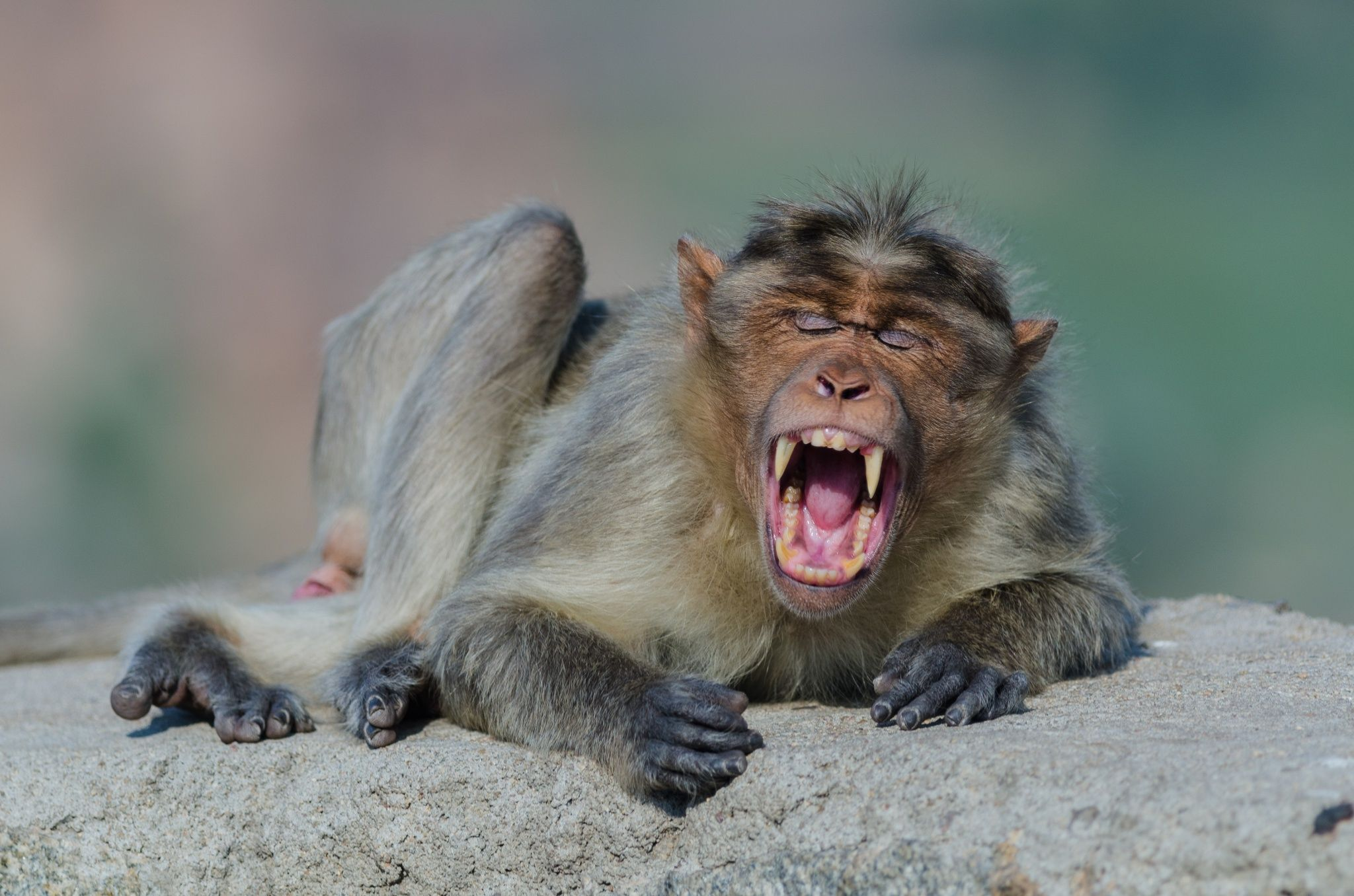 A Tired Monkey is a Happy Monkey by Ohad Uliel