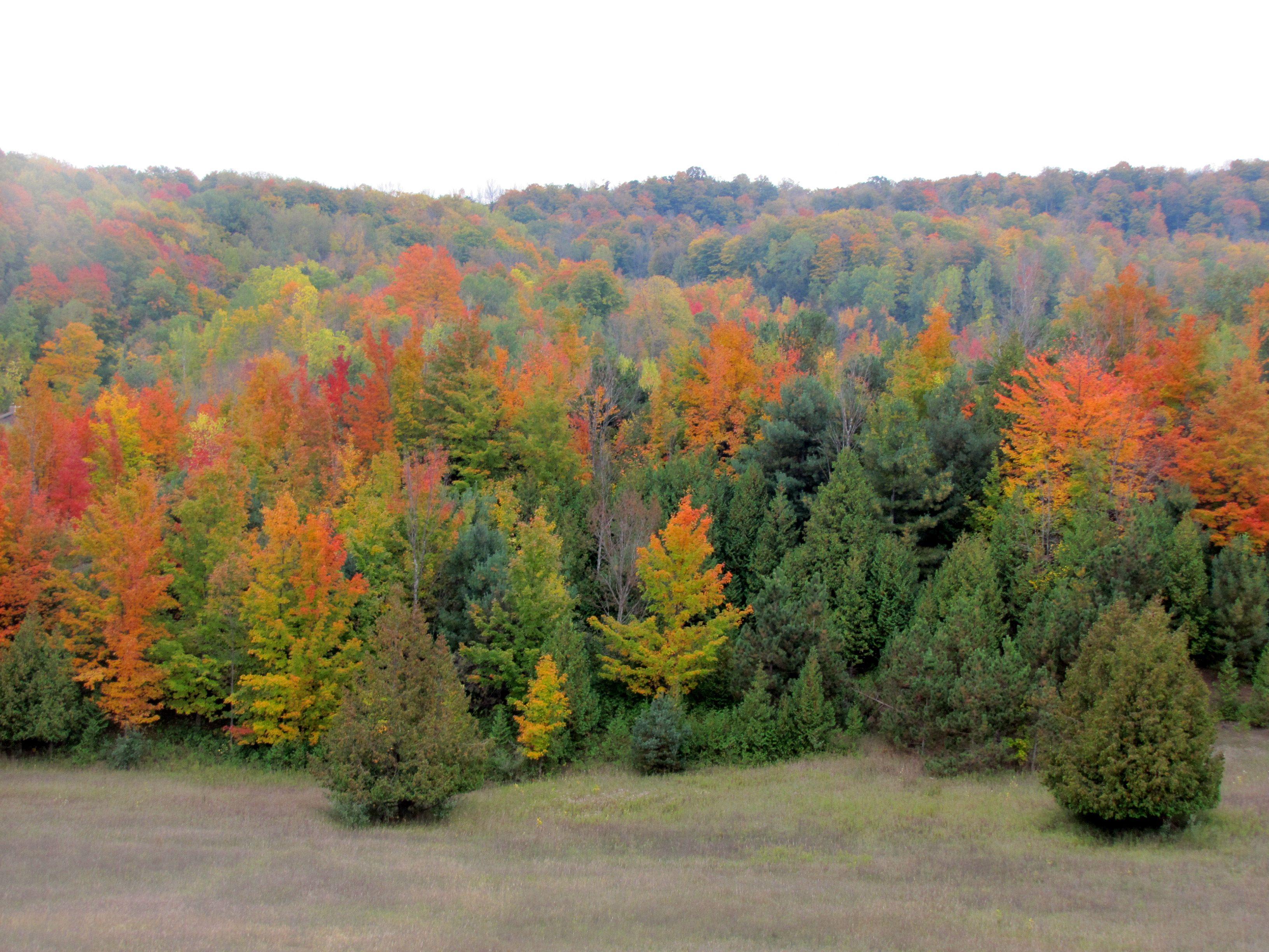 Fall Foliage In Traverse City Michigan Photography By Andrea Arbit Michigan Lowerpeninsula Upnorth North Michigan Photography Photography Fall Foliage