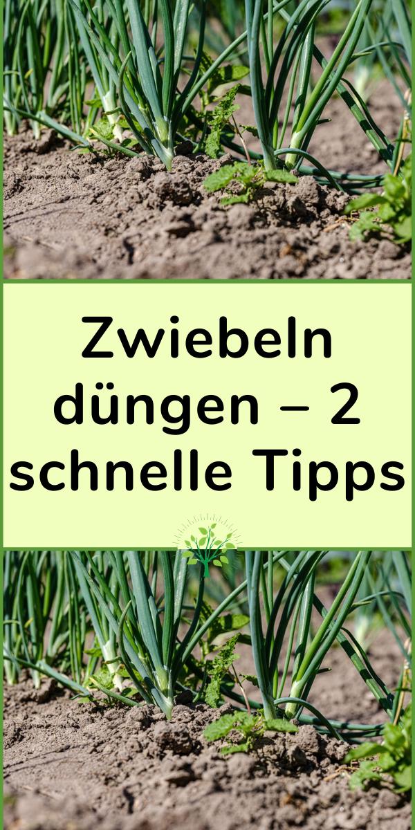 Zwiebeln Dungen 2 Schnelle Tipps In 2020 Herbs