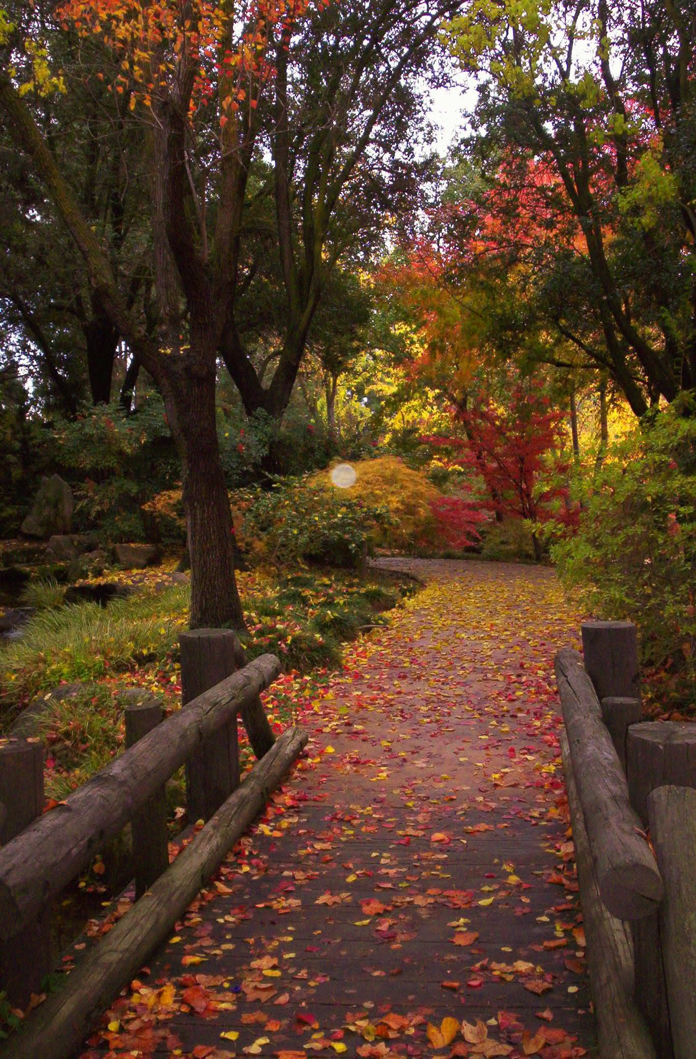 Woodward Park, Fresno, CA. Path in Fall Leaves | California ...