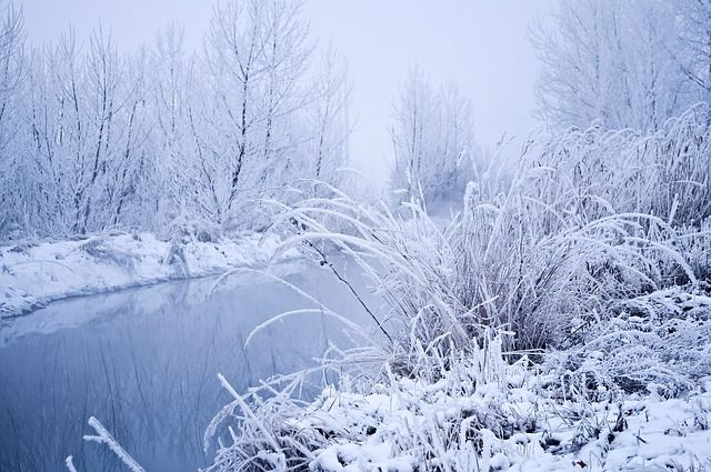 winter landscape stock photo public domain pictures