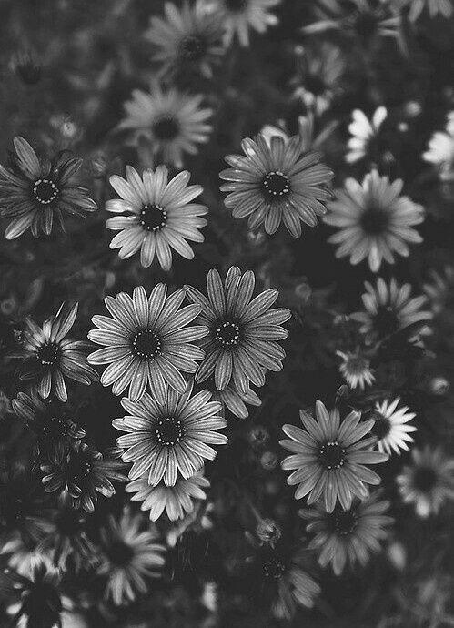 Pin von Silke  auf Blumen schwarzwei  Blumen schwarz