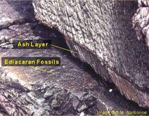 dating med hjälp av fossila assemblage gratis online dating Thunder Bay