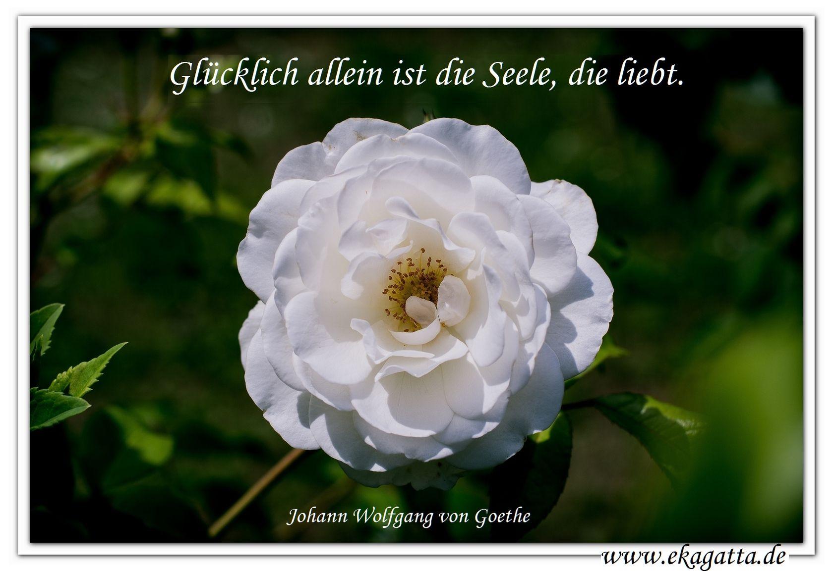 Citaten Goethe : Quot glücklich allein ist die seele liebt goethe