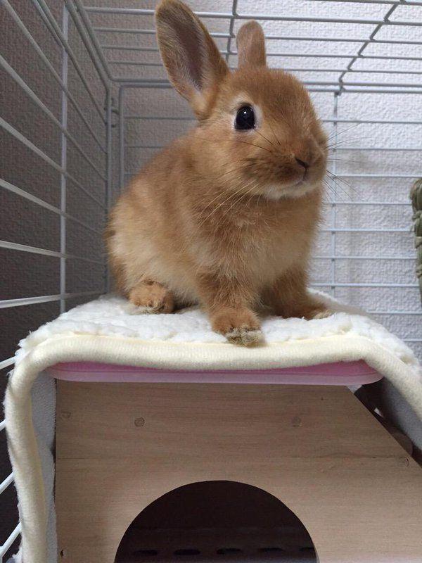 小島瑠璃子 Ruriko Kojima 子ウサギ かわいいウサギ ウサギ