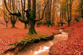 Image result for images autumn season