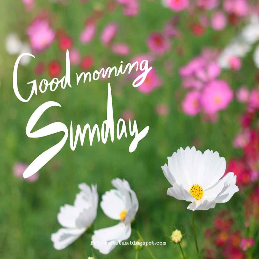 Happy Sunday Morning Quotes With Beautiful Sunday Quotes Images
