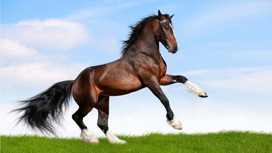 Large Black Horse Running In A Field Of Green Grass Desktop Wallpaper Hd Horses Bay Horse Horse Wallpaper