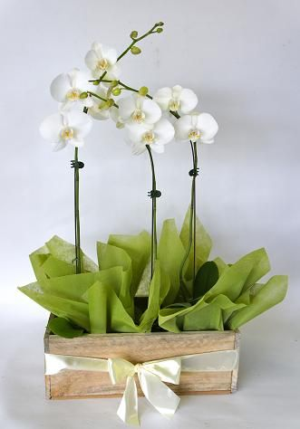 Orchids 3 White Phalaenopsis Orchids In Wooden Container Wooden Containers Orchids Glass Vase