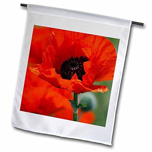 Yves Creations Florals and Bouquets - Beautiful Red Poppy... http://www.amazon.com/dp/B00TQ2IZ64/ref=cm_sw_r_pi_dp_7Kpsxb11ZR92Z