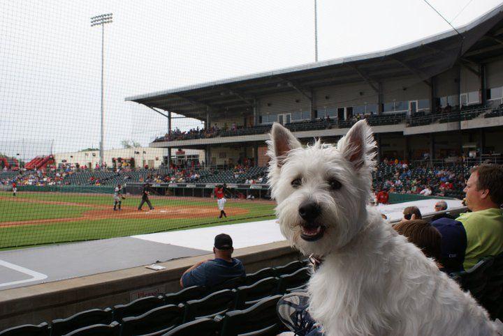 About Preston From Dog Heaven Westies Scottie Terrier