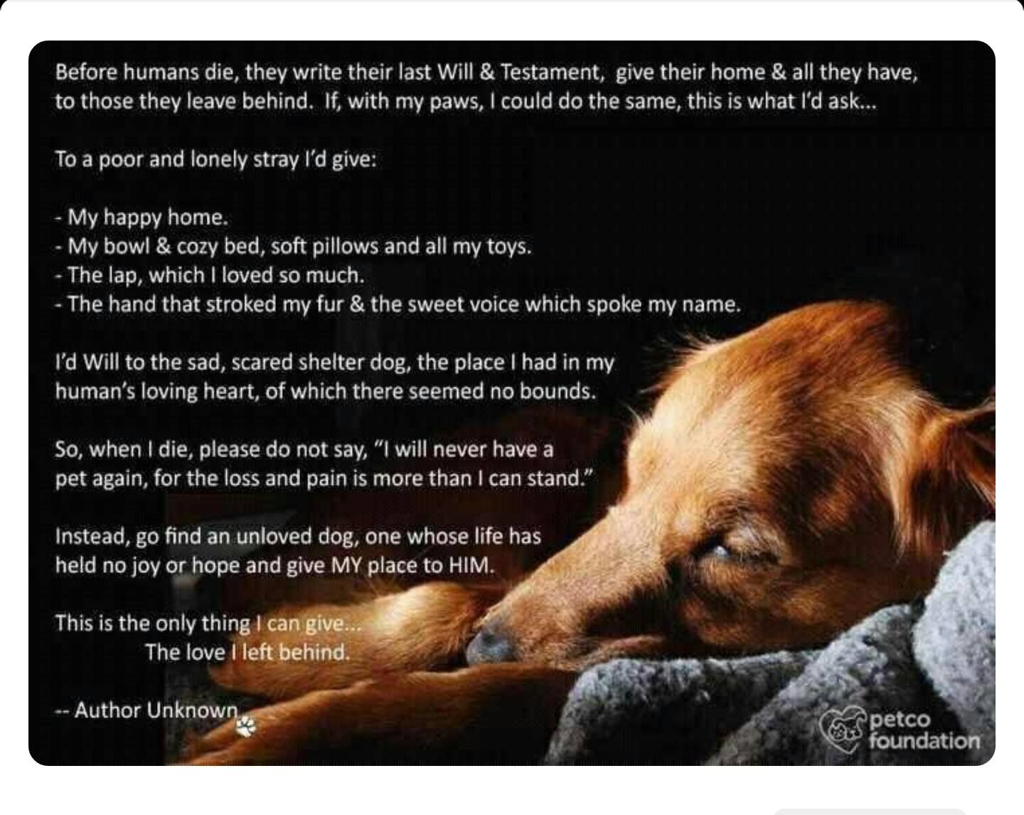 Idea By Lori Newman On I Love Dogs A Dogs Prayer Last Will And Testament Dog Quotes