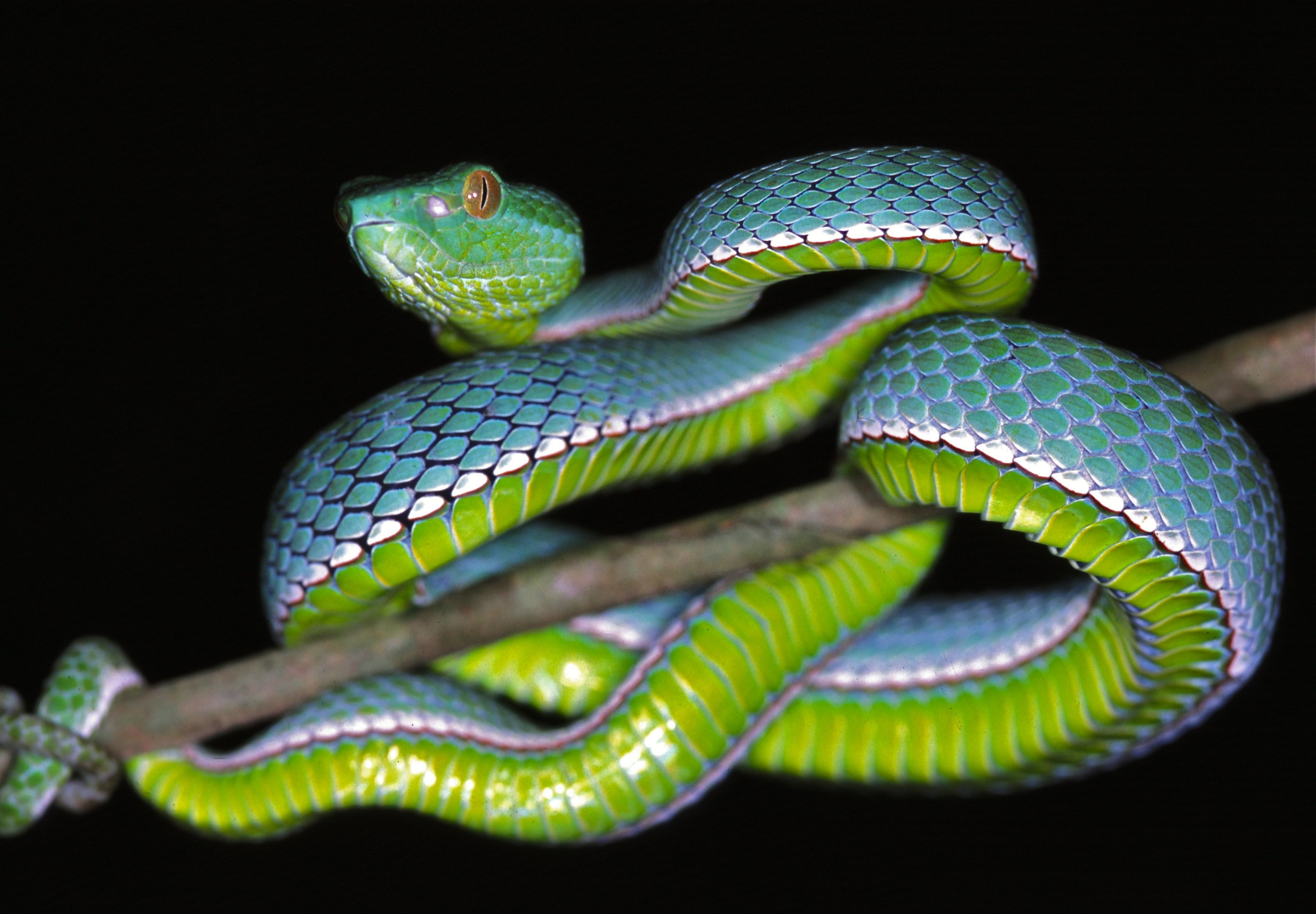 давно самые красивые змеи планеты фото содержания