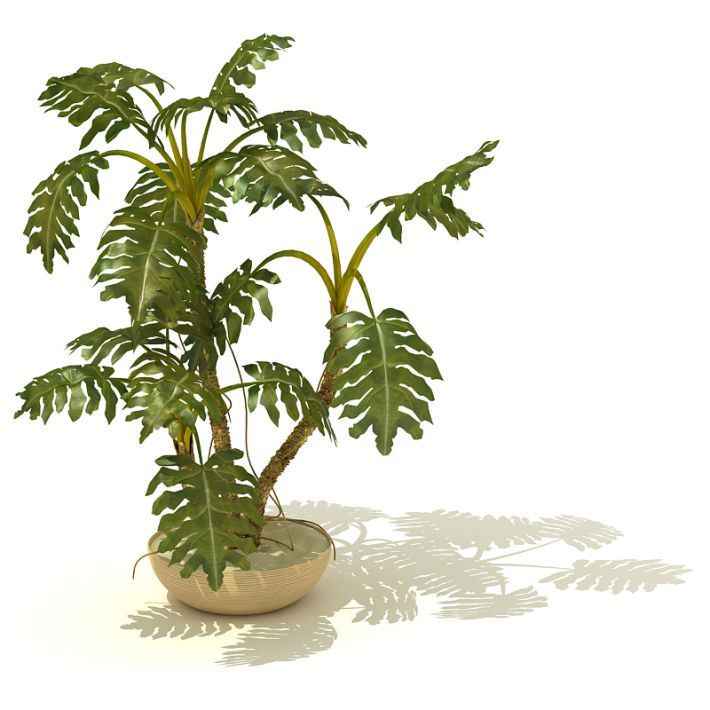 Potted Tropical Indoor Plant 3D Model Plants And 3d
